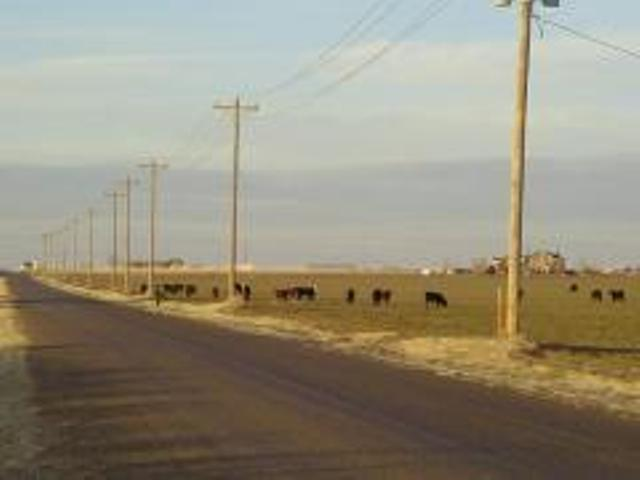 26/30: Cattle Capital of the Southwest