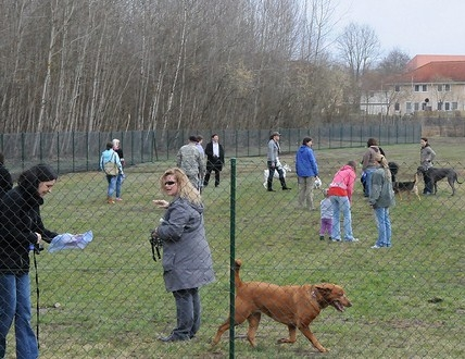 2/35: Getting together at the Dog Park